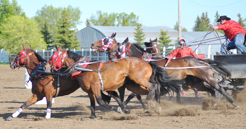 Former Rapid View area resident Vern Nolin charges hard out of the barrels earlier this year in North Battleford.